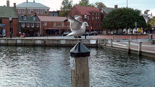 2013-11-11-AnnapolisharborAbuFadil.jpg