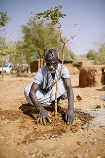 Farmer replanting trees in West Africa. Photo: CIFOR