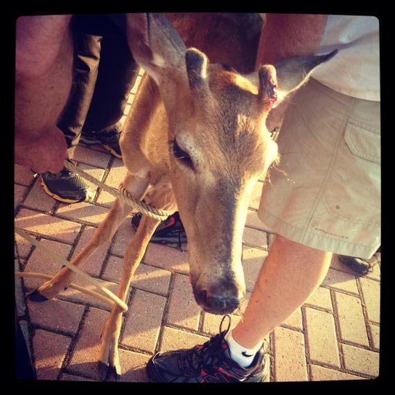 2013-11-11-deer1.jpg
