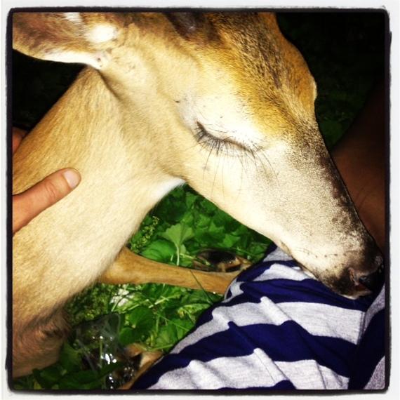 2013-11-11-deer3.jpg