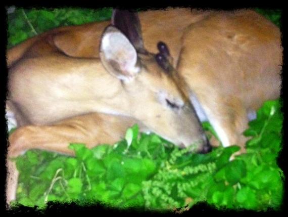 2013-11-11-deer5.jpg