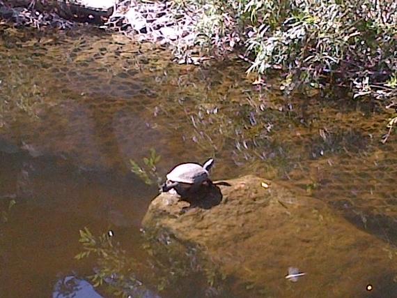 2013-11-13-TurtleWallerCreek.JPG