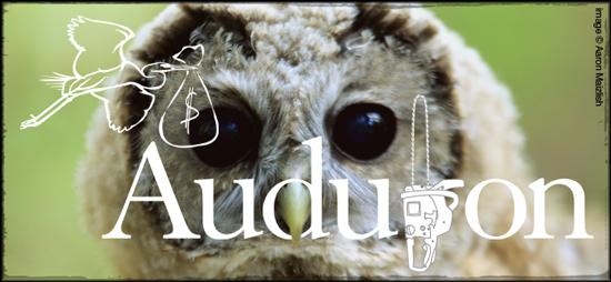 2013-11-13-audubon_spotted_owl.jpg