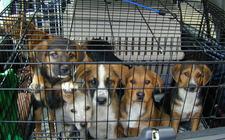 2013-11-14-puppiesweek11.jpg