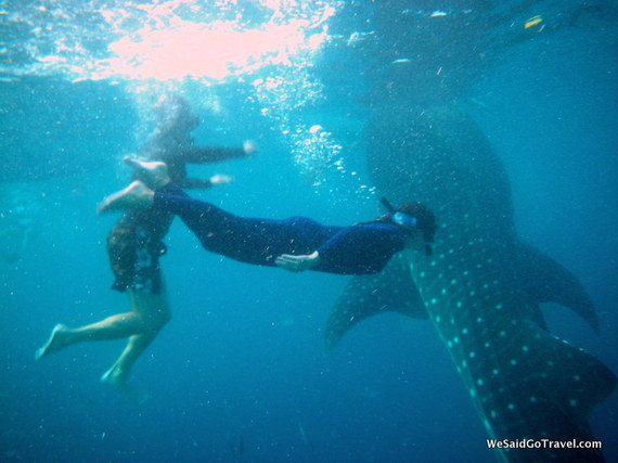 2013-11-15-WhaleSharkGeorgeLisa.JPG