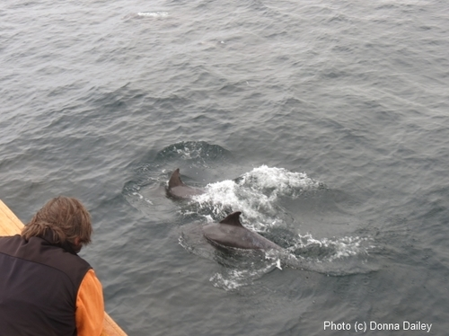2013-11-16-Scotland_Wildlife_Cruise_Clive_Dolphins.jpg