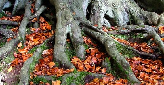 2013-11-19-treeroots.jpg
