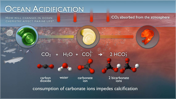 Ocean Acidification: The Climate Change Buffer, but Another Environmental Disaster in the Making