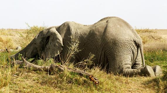 2013-11-20-ElephantCrouching.jpg