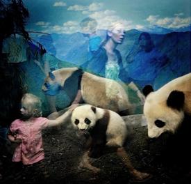 2013-11-20-TraerScott_Pandas.TraerScottcopy.jpg