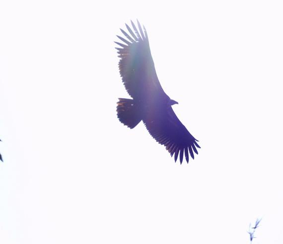 2013-11-20-eagle.jpg