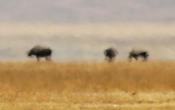 2013-11-21-Rhinos.jpg