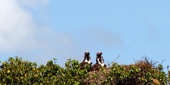 2013-11-21-Vultures.jpg