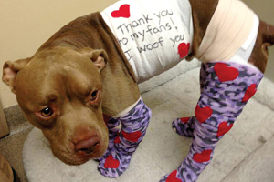 2013-11-21-pitbull.jpg