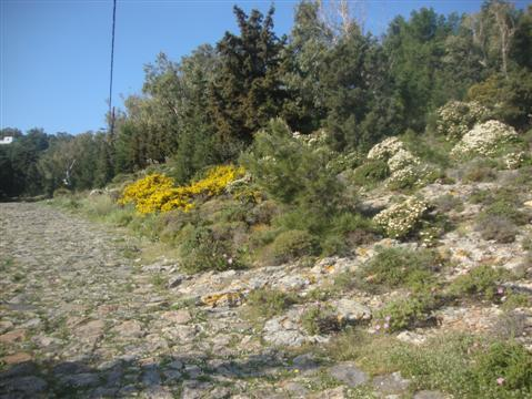 2013-11-24-Greece759Custom.JPG