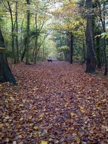 2013-11-28-AutumnwithRuffinwoods.jpg