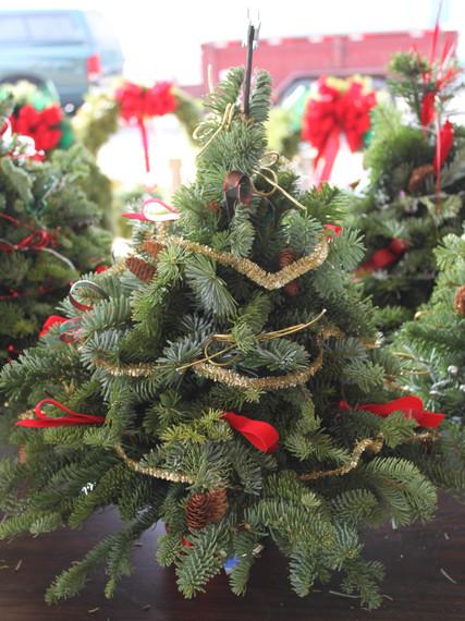 2013 11 28 emcminitreejpg - Real Mini Christmas Tree