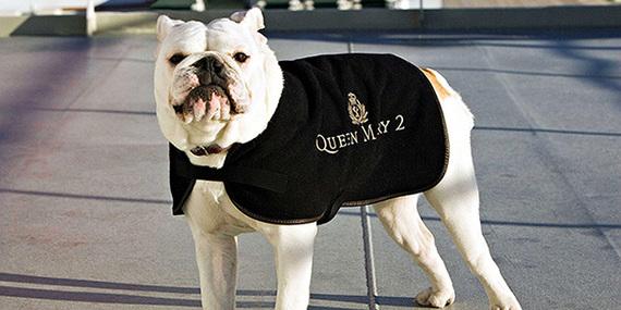 2013-12-03-cunardkennelqm2bulldog610.jpg