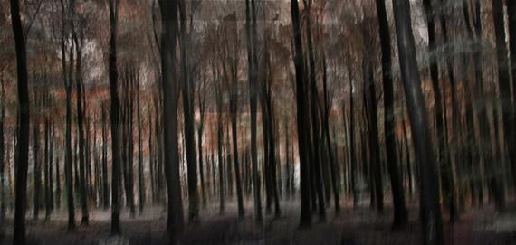 2013-12-04-1_Acid_Forest_80x140cm.jpg