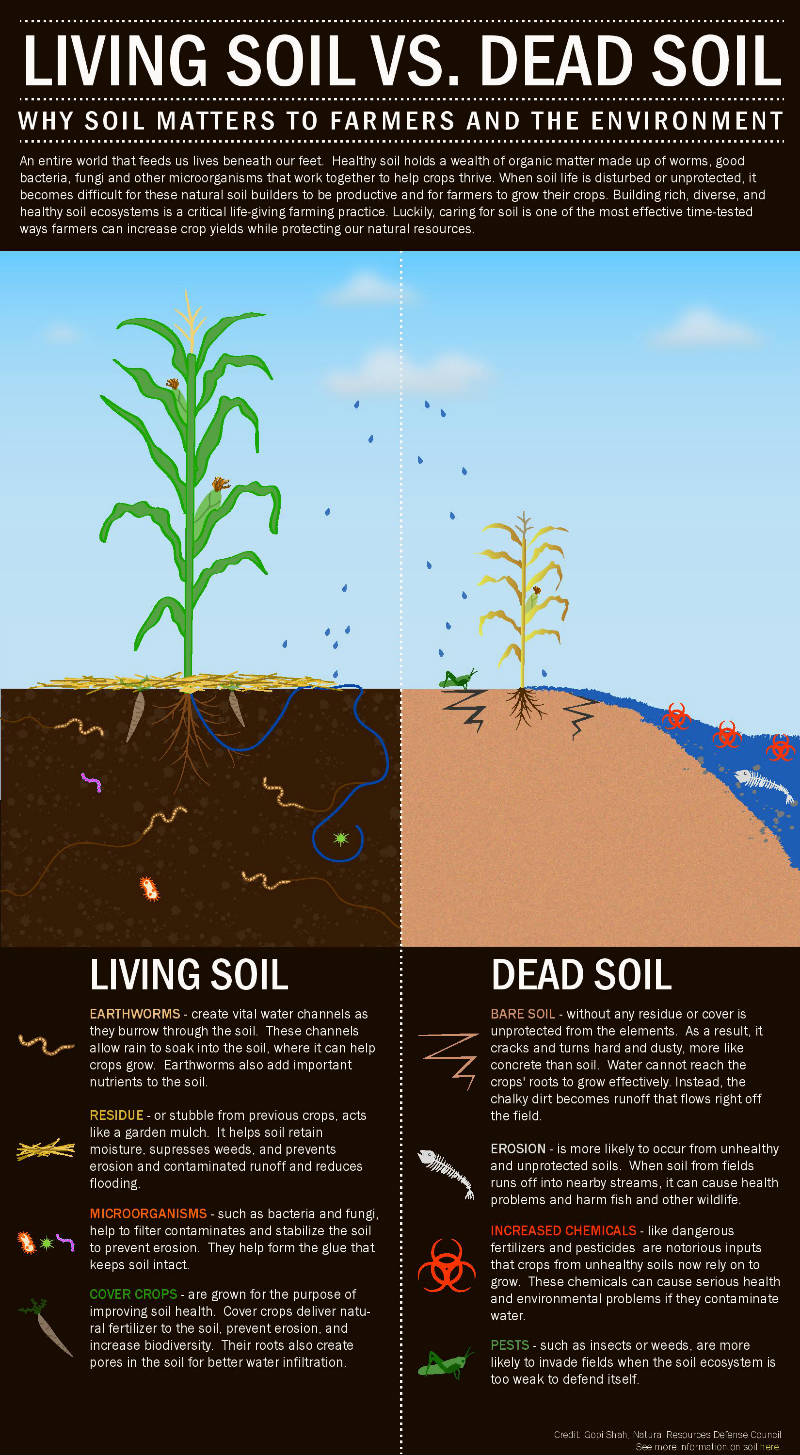 5 Signs Of Healthy Soil In Honor Of World Soil Day Huffpost