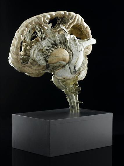 2013-12-09-MindMapsModelofahumanbrainsectionedFrenchfirsthalf19thcenturycreditScienceMuseum2.jpg