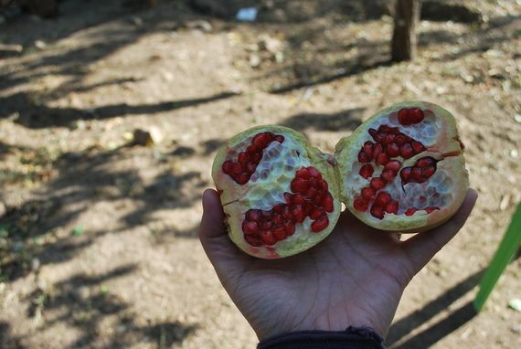2013-12-10-pomegranate.jpg