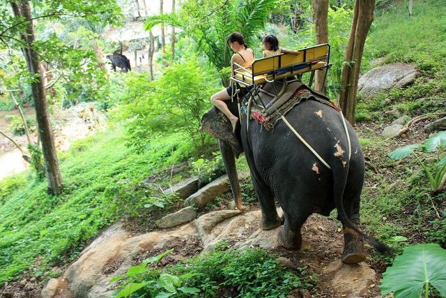 Elephant trek, Phuket