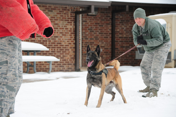 2013-12-12-caninesbuteintowork.JPG