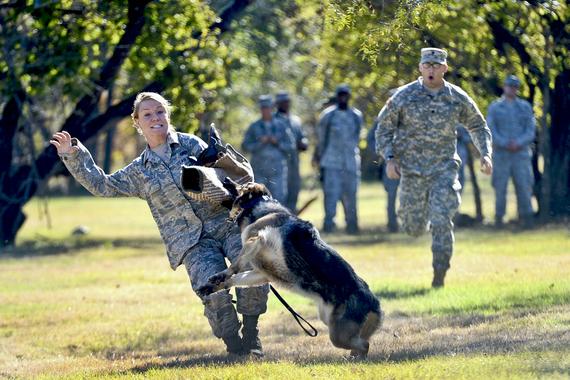 Dog Training School Norfolk Va