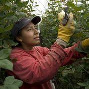 2013-12-14-OBfarmworker.jpg