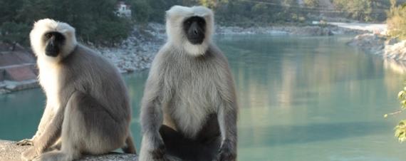 2013-12-18-monkey.jpg