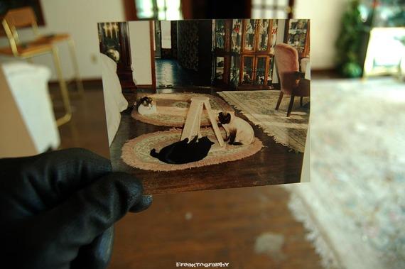 2013-12-19-AbandonedCatHouse16.jpg