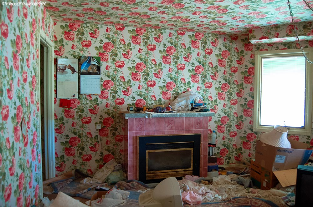 Curiosity Killed The Cat A Sad Story From An Abandoned Home