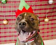2013-12-19-dog.jpg