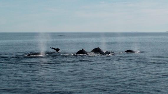 2013-12-20-4.WhalesofftheHermanuscoastline.jpg