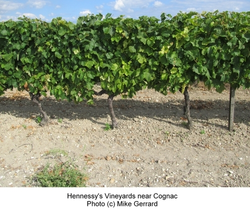 2013-12-20-Hennessy_Vineyards_Near_Cognac.jpg