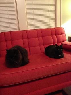 2013-12-23-catfriends.jpg