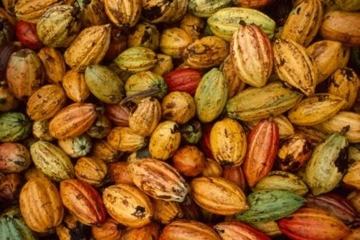 2013-12-27-cacao1.jpg