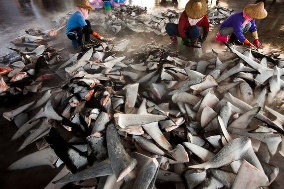 2013-12-28-SharkFinners2