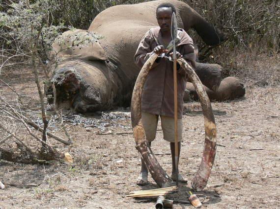 2013-12-28-elephantslaughter2jpg
