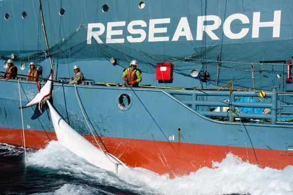 2013-12-31-JapaneseOceanKillers1