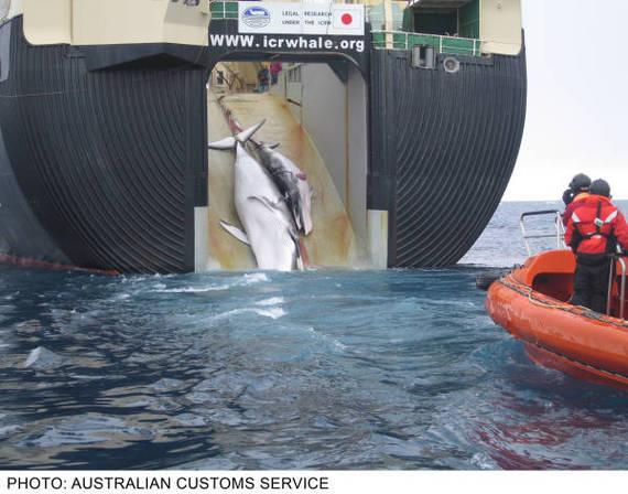 2013-12-31-Whalingnarlee