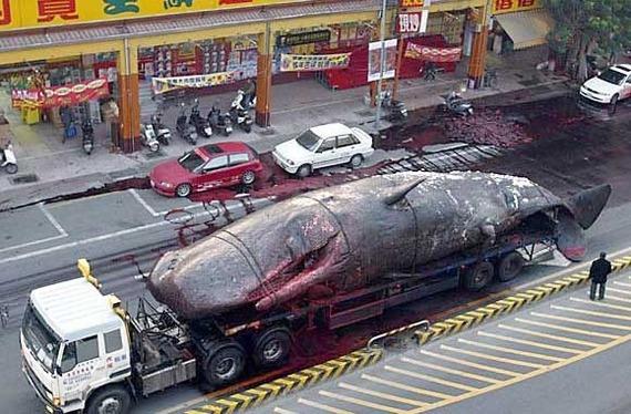 2013-12-31-whalemeat1.jpg