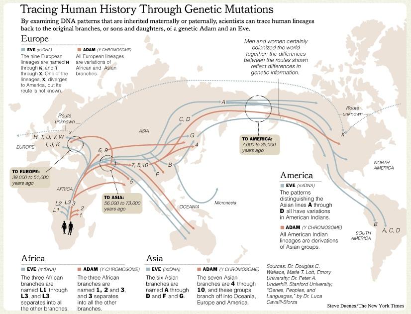 evolution essay outline