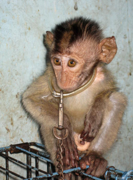 Wildlife Trade Why Is No One Shouting About Animal Welfare
