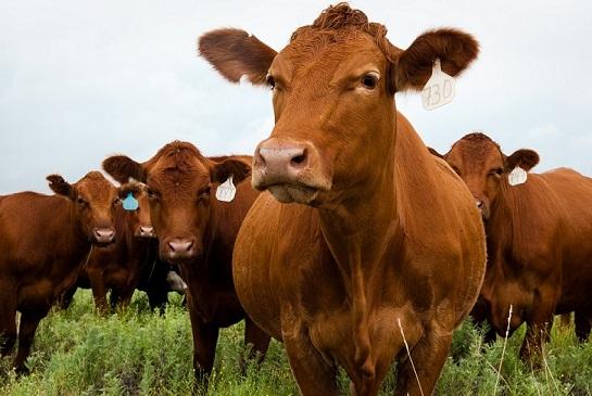 CME: Рынки ждут улучшения спроса на говядину