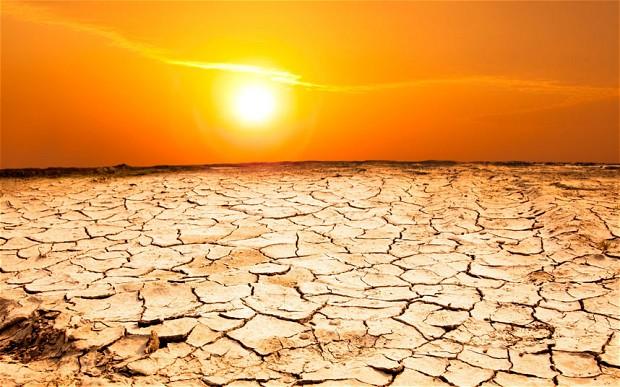 Засуха угрожает посевам твердозерной краснозерной озимой пшеницы в США