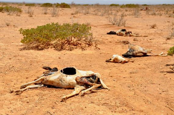 2014-01-08-DroughtsLivestockRisngFoodPricesEarthDrReeseHalter