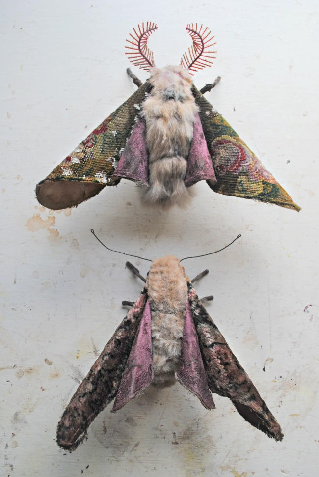 2014-01-15-Growingmoths1.jpg