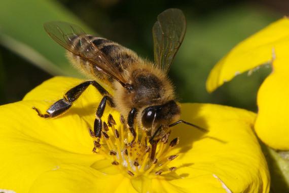 2014-01-15-HoneybeesEarthDrReeseHalter